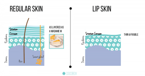 Cracked Lips & Vitamin Deficiency